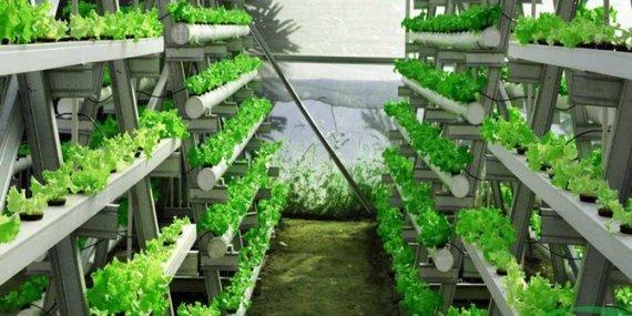 cara-menanam-hidroponik-untuk-pemula