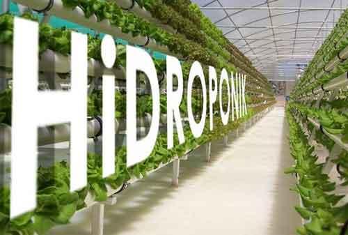 Terbaru-Cara-Menanam-Hidroponik-di-Rumah-dengan-Biaya-Investasi-yang-Terjangkau-02-Finansialku